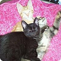 Adopt A Pet :: Bruce Wayne - Grand Rapids, MI