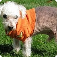 Adopt A Pet :: Newton - Wilmington, MA