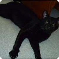 Adopt A Pet :: Salem - Hamburg, NY