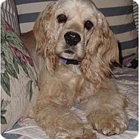 Adopt A Pet :: Roman - Sugarland, TX