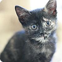 Adopt A Pet :: Jazzy - Canoga Park, CA