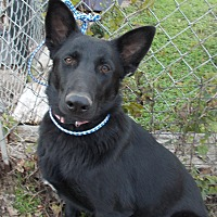 Adopt A Pet :: Rhoda - Dallas, TX