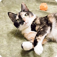 Adopt A Pet :: Marzipan - Chicago, IL