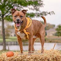 Adopt A Pet :: Ryan - Columbus, OH