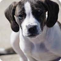 Adopt A Pet :: Chrissy - Mechanicsburg, PA