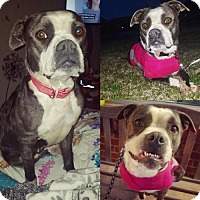 Adopt A Pet :: DIAMOND - Lawton, OK