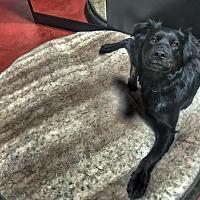Adopt A Pet :: Gris - San Francisco, CA