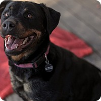 Adopt A Pet :: Millie - Pittsburg, KS