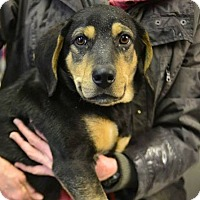 Adopt A Pet :: Frank - Beacon, NY