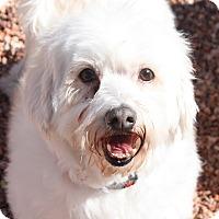 Adopt A Pet :: Junior - Henderson, NV