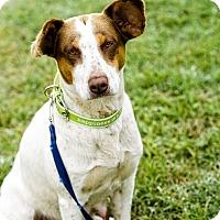Adopt A Pet :: Willow TM - Schertz, TX