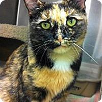 Adopt A Pet :: Bobbie - Warminster, PA