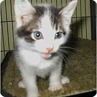 Adopt A Pet :: Barry - Shelton, WA