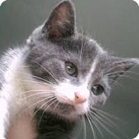 Adopt A Pet :: Badger - Lancaster, MA