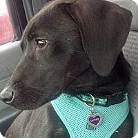 Adopt A Pet :: Buckley - nashville, TN