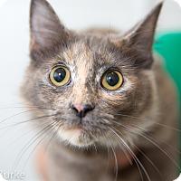 Adopt A Pet :: Delilah - Athens, GA