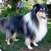 Adopt A Pet :: Beijing - Riverside, CA