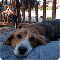 Adopt A Pet :: Jagger - Yardley, PA
