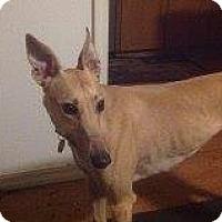 Adopt A Pet :: Southwind - Seattle, WA