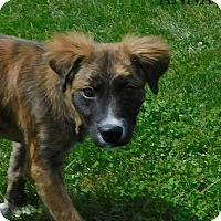 Adopt A Pet :: anna - mooresville, IN