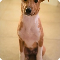 Adopt A Pet :: FREDDY - Katy, TX