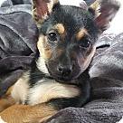 Adopt A Pet :: Shonda