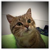 Adopt A Pet :: THEA - Medford, WI