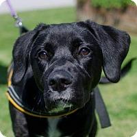 Adopt A Pet :: Ava - Greenwood, SC