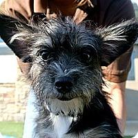 Adopt A Pet :: Rufus - white settlment, TX