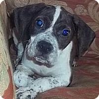 Adopt A Pet :: Baxter - Plainfield, CT
