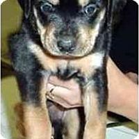 Adopt A Pet :: MAVERICK - dewey, AZ