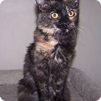 Adopt A Pet :: K-Dave2-Iris - Colorado Springs, CO