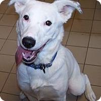 Adopt A Pet :: Polar - Jackson, MI