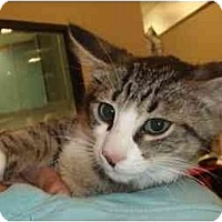 Adopt A Pet :: Sidney - New Egypt, NJ
