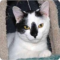 Adopt A Pet :: Speck - Markham, ON