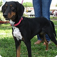 Adopt A Pet :: Penny - Gainesville, FL