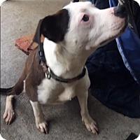 Adopt A Pet :: Iris - Houston, TX