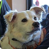 Adopt A Pet :: Flippy - adoption pending - Rockville, MD