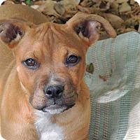 Adopt A Pet :: RUBY - Grand Island, FL