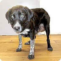 Adopt A Pet :: 17-d03-039 Blue - Fayetteville, TN
