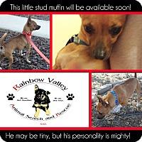 Adopt A Pet :: Rocky - Buckeye, AZ