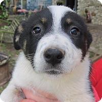 Adopt A Pet :: Dinah - Wharton, TX