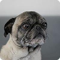 Adopt A Pet :: Percy - Roosevelt, UT