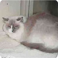 Adopt A Pet :: Belle - Keizer, OR