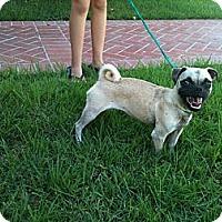 Adopt A Pet :: Grace - Anaheim, CA