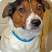 Terrier (Unknown Type, Medium) Mix Dog for adoption in Columbia, Tennessee - Princeton/TN