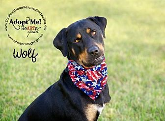 Rottweiler Dog for adoption in White Hall, Arkansas - Wolf