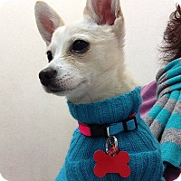 Adopt A Pet :: Snow - Las Vegas, NV
