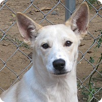 Adopt A Pet :: Jackson - Allentown, PA