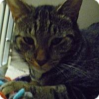 Adopt A Pet :: Simon Loper - Hamburg, NY